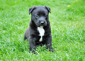 pet insurance dog